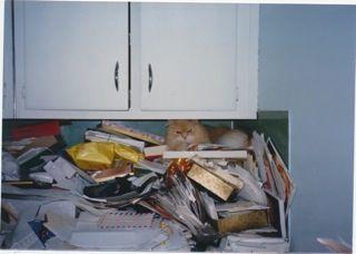 "Cimarron in mom's ""office"""