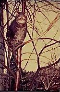 PJ the Cat photo