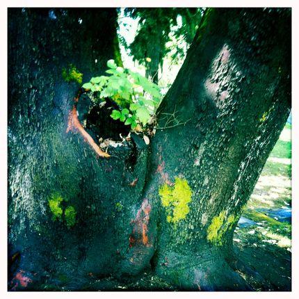 Inspiring Moment: Mossy Tree
