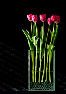 Inspiring Moment: Spring Tulips