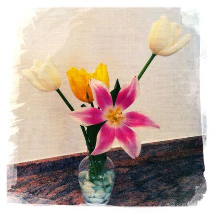 Inspiring Moment: Starburst Tulips