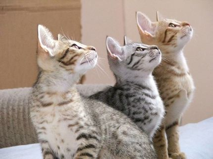Three attentive kittens five more minutes with