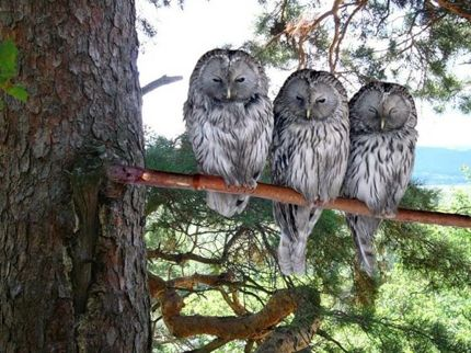 Three owls five more minutes with