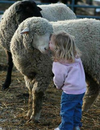 Girl kissing sheep five more minutes with website link
